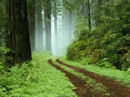 Forests are crucial to the survival of a great many of the million plus species on planet Earth.