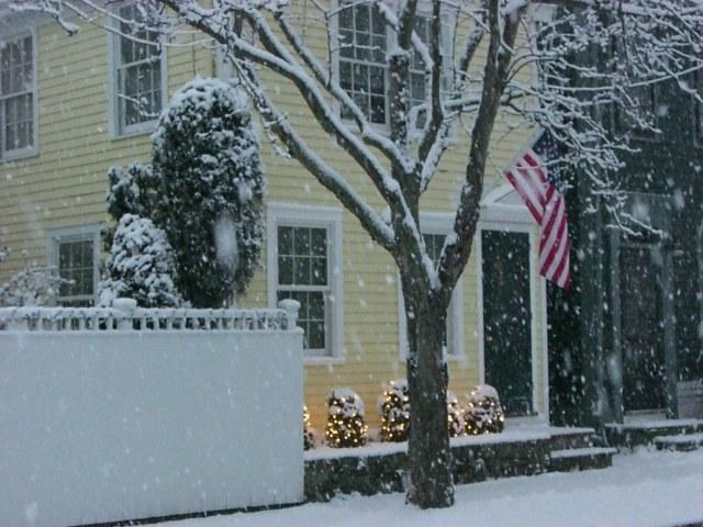 Feb Snow Lights Tree Resized