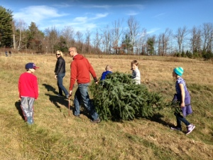My son and his family cutting their own Christmas  tree last year.