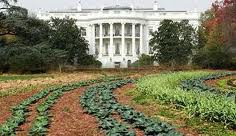 The most powerful garden in the world