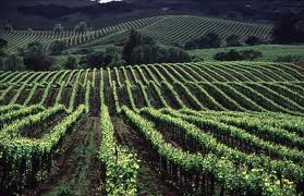Sonoma County, California---one of the most beautiful places on Earth.