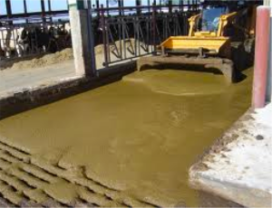 Semi-liquid fecal waste on a dairy farm in the USA.
