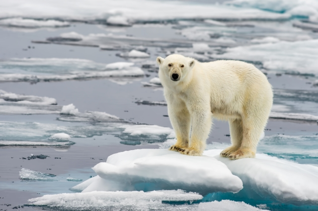 """This bear represents the """"elephant in the room,"""" CLIMATE CHANGE--the runaway problem that exacerbates all others."""