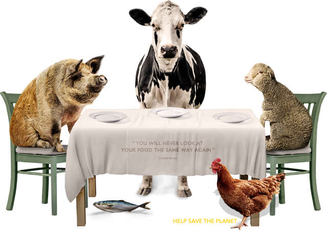 Food Choices Animals